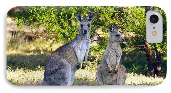 IPhone Case featuring the photograph Wild Kangaroos by Stuart Litoff