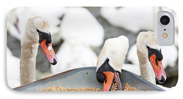 Wild Mute Swans Pinching Grain IPhone Case