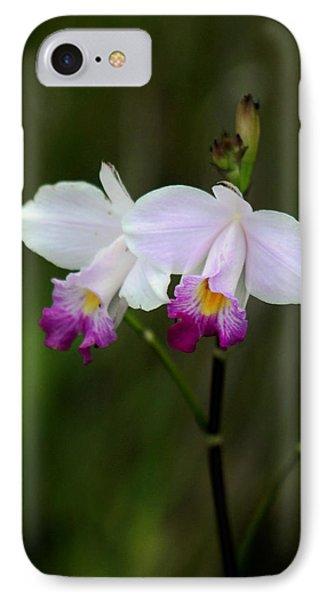Wild Orchid IPhone Case by Pamela Walton