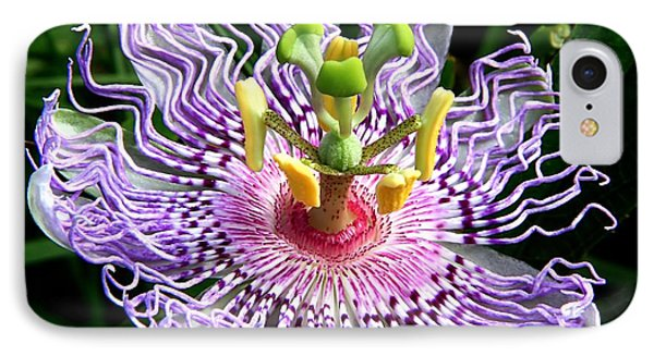Wild Passion Flower IPhone Case