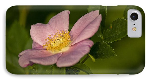 Wild Rose Phone Case by Alana Ranney