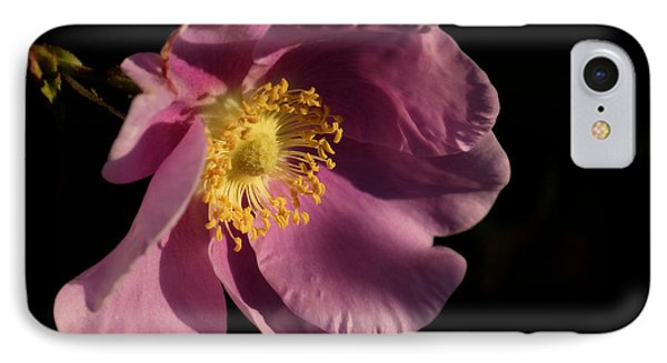 IPhone Case featuring the photograph Wild Rose by Inge Riis McDonald