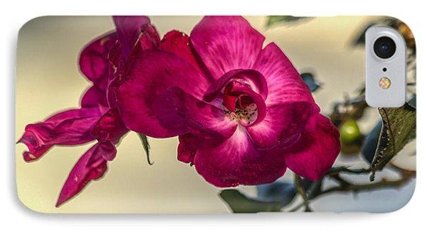 Wild Rose IPhone Case by Jane Luxton