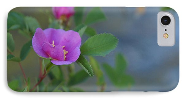 IPhone Case featuring the photograph Wild Rose by Jenessa Rahn