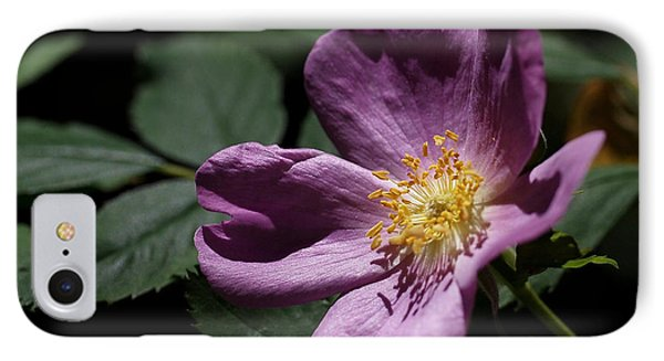 Wild Rose IPhone Case by Rona Black