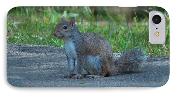Wild Squirrel IPhone Case by Kathy Long