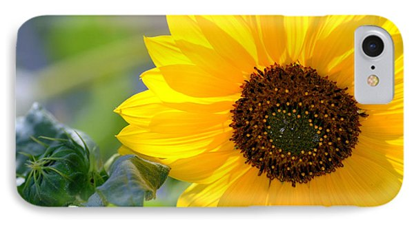 IPhone Case featuring the photograph Wild Sunflower by Nadalyn Larsen