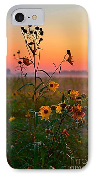 Wild Sunflowers At Dawn IPhone Case by Julie Dant