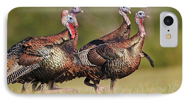 Wild Turkey (meleagris Gallopavo IPhone Case