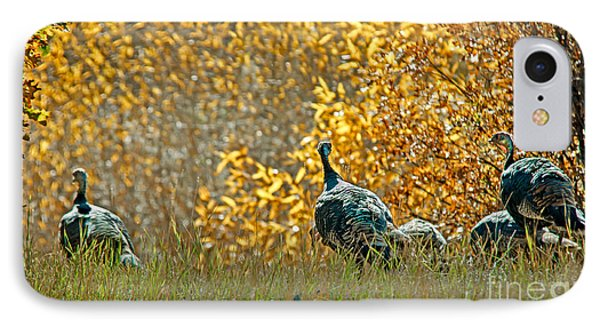Wild Turkeys And Fall Colors IPhone Case