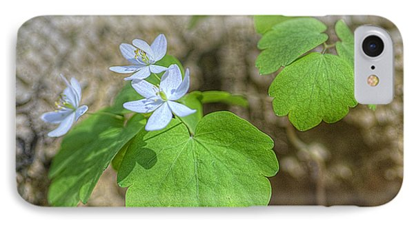 IPhone Case featuring the photograph Wildflower In Woods by Wanda Krack