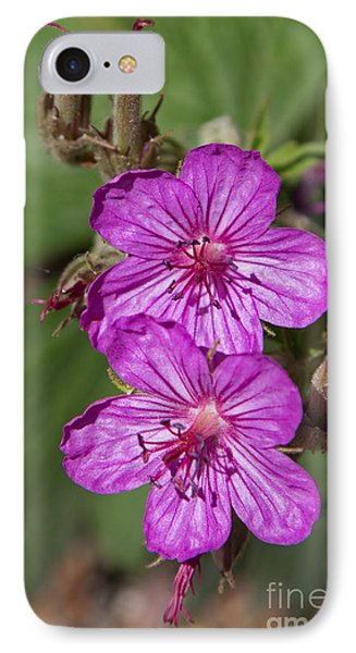 Wildflowers In Glacier National Park Phone Case by Natural Focal Point Photography