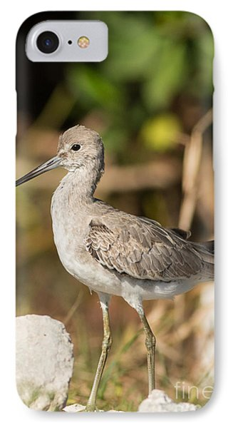 Willet Walking Near The Water IPhone Case by Natural Focal Point Photography