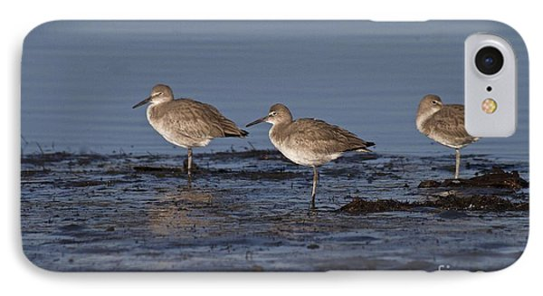 IPhone Case featuring the photograph Willet's In The River by Ruth Jolly