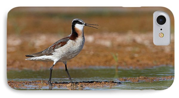 Wilson's Phalarope Calling IPhone Case