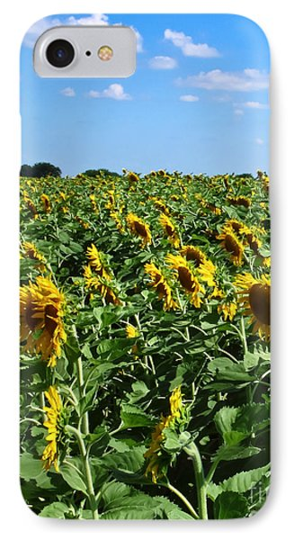 Windblown Sunflowers IPhone Case