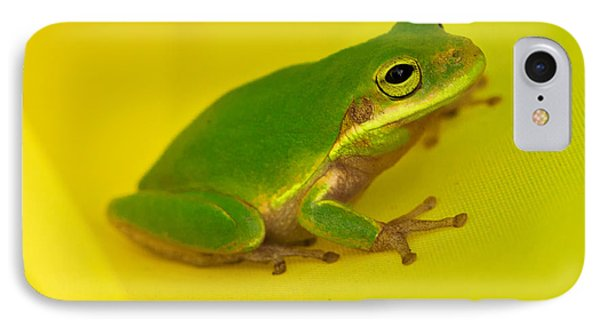 Windsock Treefrog IPhone Case by William Richhart
