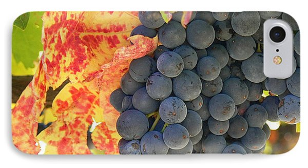 Wine Country IPhone Case by France  Art