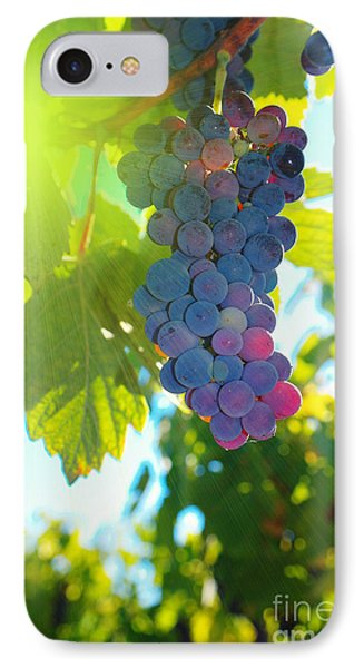 Wine Grapes  Phone Case by Jeff Swan