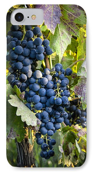 Wine Grapes Phone Case by Tetyana Kokhanets
