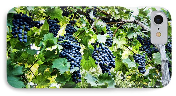 Wine On The Vine IPhone Case by Cricket Hackmann