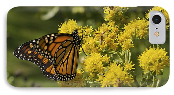 Wings - Monarch On Goldenrod IPhone Case by Jane Eleanor Nicholas