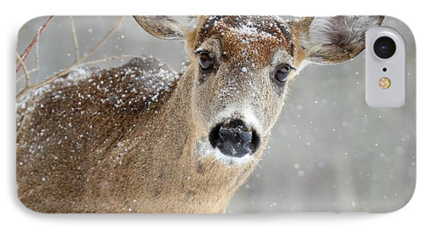 Winter Buck IPhone Case by Amy Porter