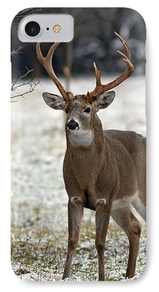 IPhone Case featuring the photograph Winter Buck by Timothy McIntyre