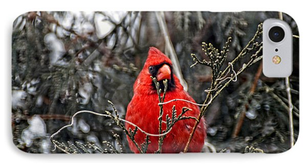Winter Cardinal 03 Phone Case by Thomas Woolworth