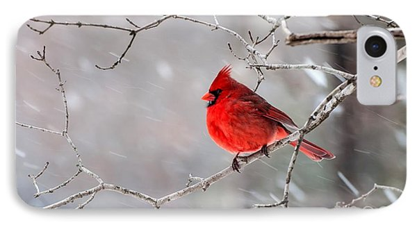 Winter Cardinal IPhone Case by Debbie Green