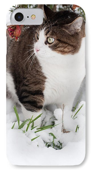 IPhone Case featuring the photograph Winter Cat by Laura Melis