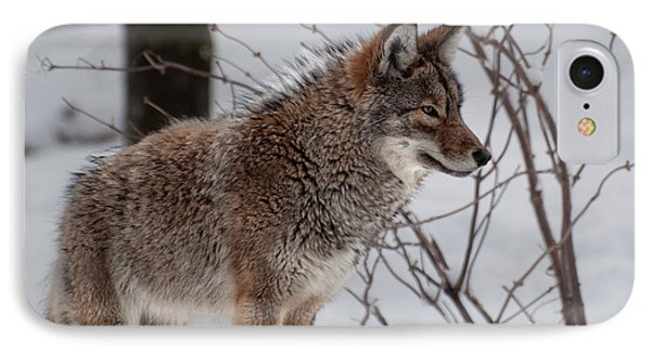 Winter Coyote IPhone Case