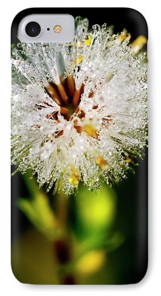 IPhone Case featuring the photograph Winter Dandelion by Pedro Cardona
