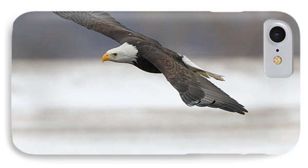 Winter Eagle IPhone Case by Coby Cooper