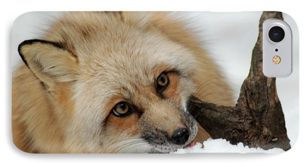 Winter Fox 2 IPhone Case by Richard Bryce and Family