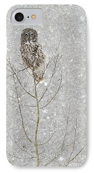 Winter Ghost IPhone Case by Dee Cresswell