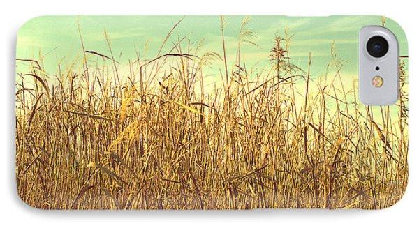 Winter Grass IPhone Case by Rachel Mirror