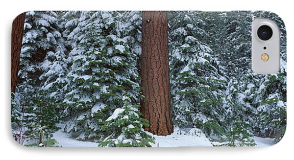 Winter In The Sierra Mountains IPhone Case by Panoramic Images