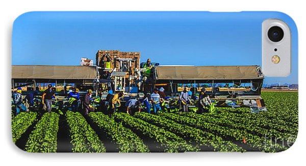 Winter Lettuce Harvest Phone Case by Robert Bales