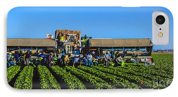 Winter Lettuce Harvest IPhone Case by Robert Bales