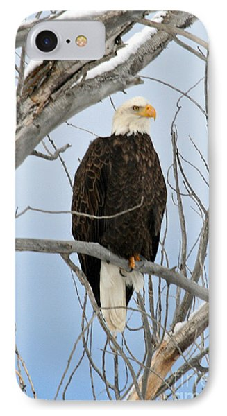 Winter Perch IPhone Case by Bob Hislop
