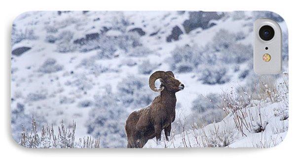 Winter Ram Phone Case by Mike  Dawson