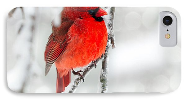 IPhone Case featuring the photograph Winter Red by Jaki Miller