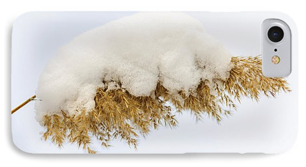 Winter Reed Under Snow Phone Case by Elena Elisseeva