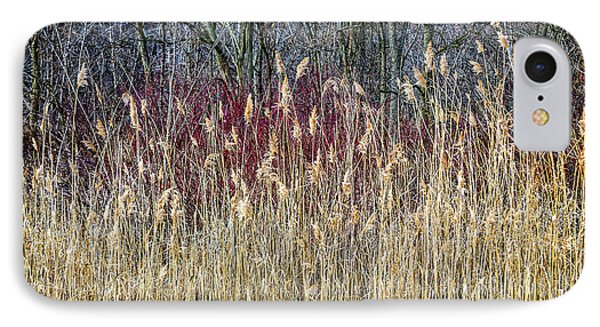 Winter Reeds And Forest IPhone Case