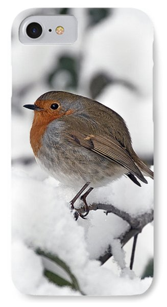 Winter Robin IPhone Case by Ross G Strachan