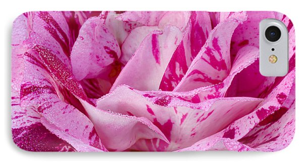IPhone Case featuring the photograph Winter Rose  by Heidi Smith