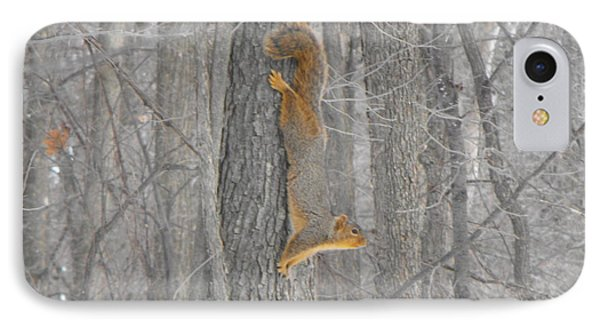 Winter Squirrel IPhone Case by Erick Schmidt