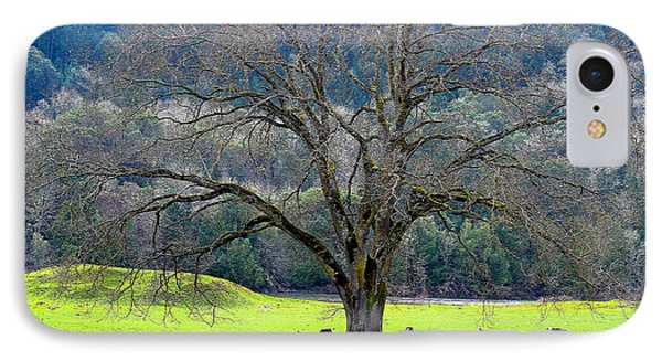 Winter Tree With Cows By The Umpqua River IPhone Case