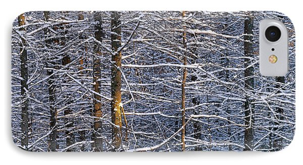 Winter Woods IPhone Case by Alan L Graham